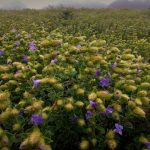 Kaas Plateau Travel Guide