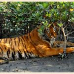 Sunderbans – The beautiful forest